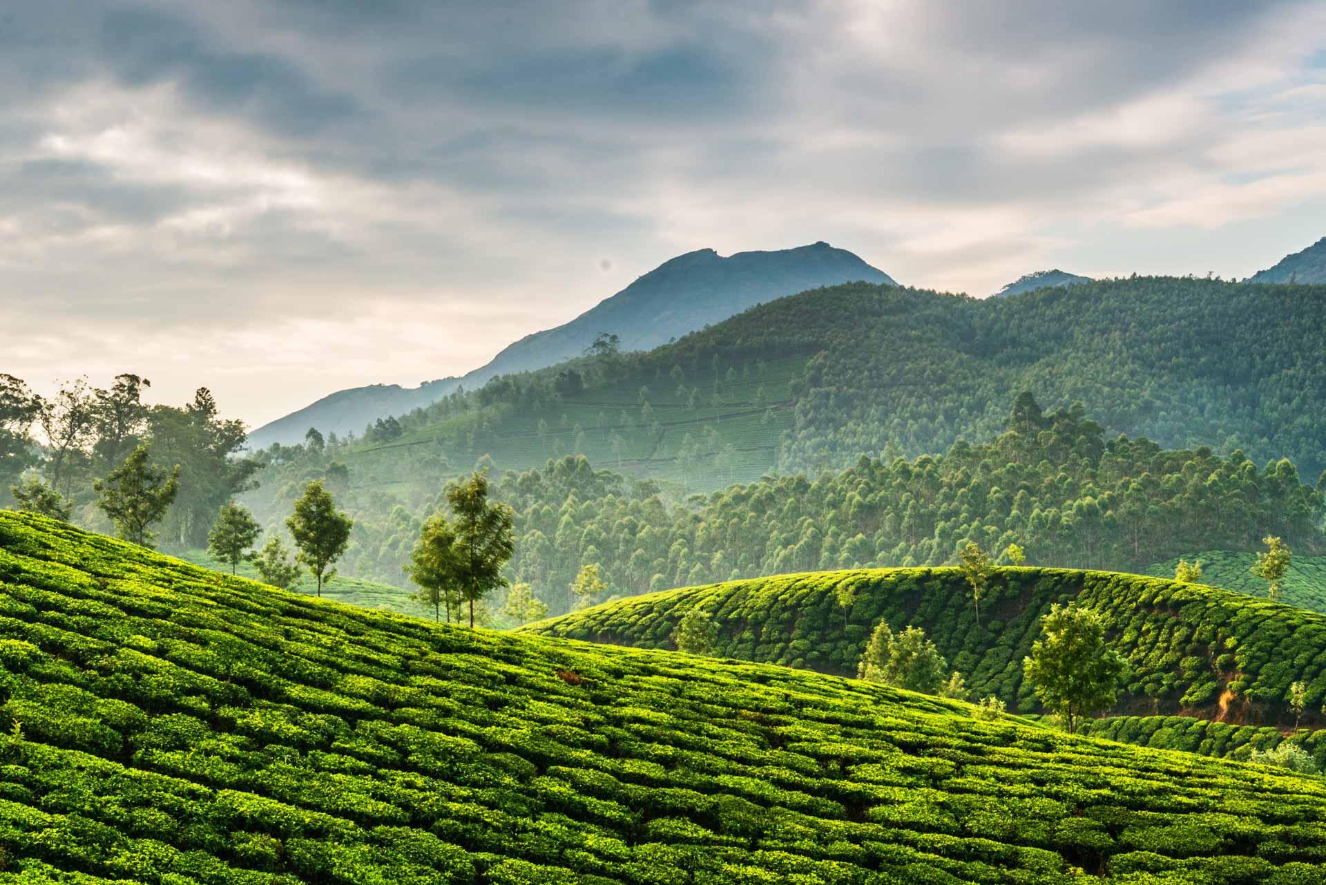 descopera-cosmetice-din-ceai-verde
